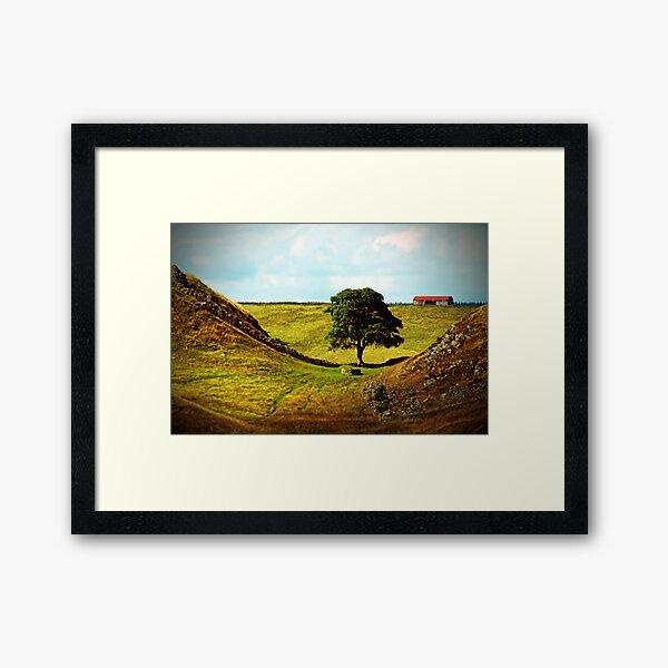 The Thieves Tree Framed Art Print