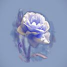 Blue Peony in Oils by Catherine Hamilton-Veal  ©