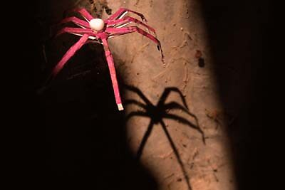 Umbrella Spider and its' Shadow by Janus