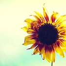 A Sunflower by brightfizz