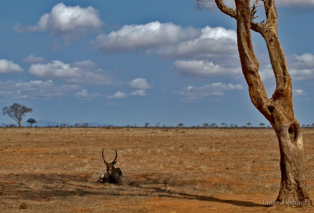 Waterbuck by Jamie  Howard