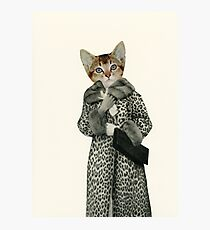 Kitten Dressed as Cat Photographic Print