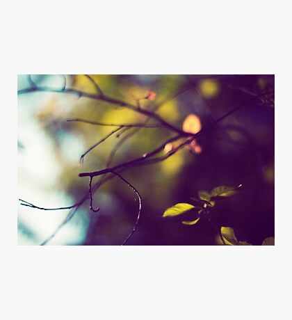Silky Branches Photographic Print