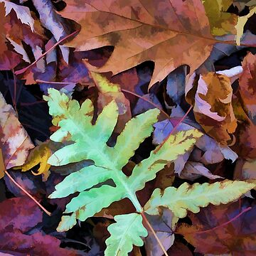Leaves - Color and Pattern by rural-guy