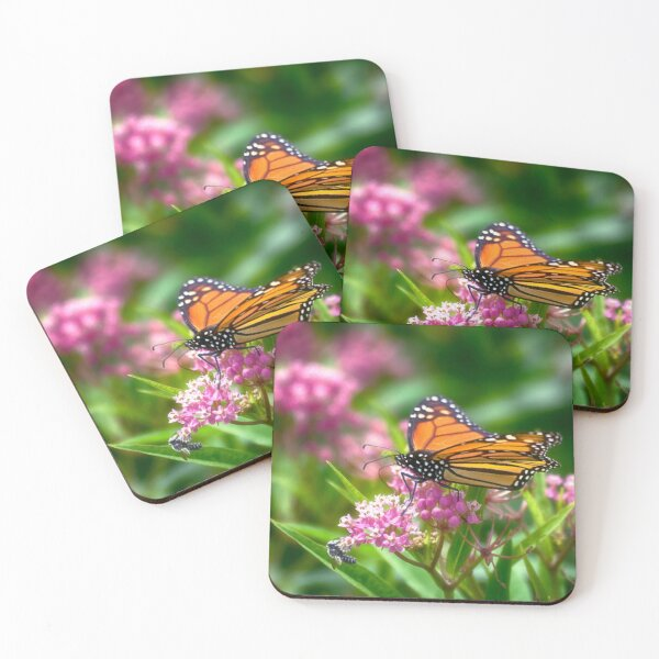 Open Wing Monarch Coasters (Set of 4)