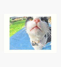 nosy feline Art Print