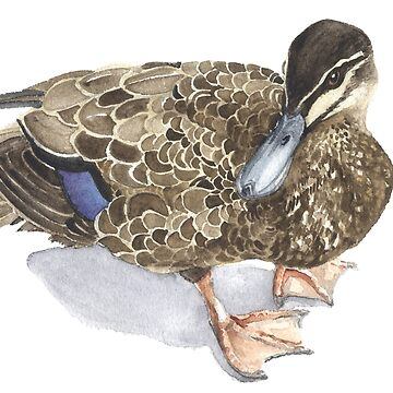 Pacific Black Duck by desines