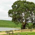 Magnificent Tree - Pykes Creek Reservoir, Vic. by EdsMum