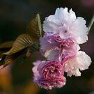 Pink Flowers by EplusC Studio