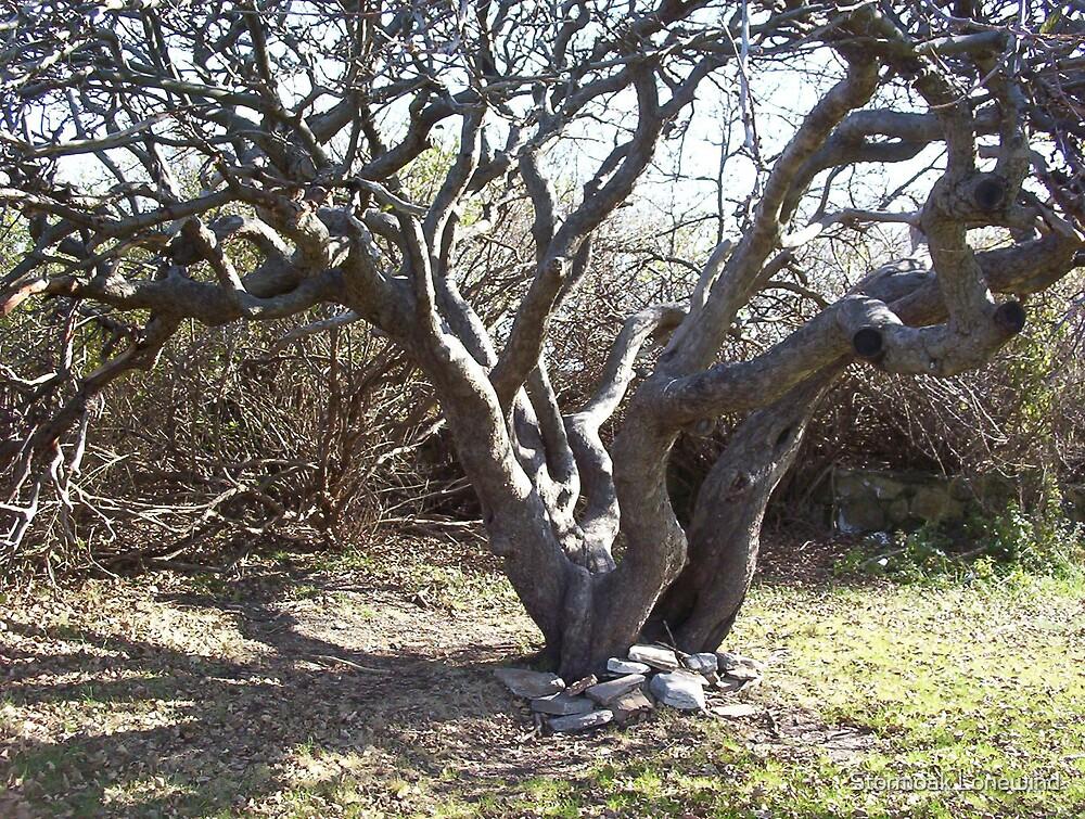 Bare Tree by Stormoak Lonewind