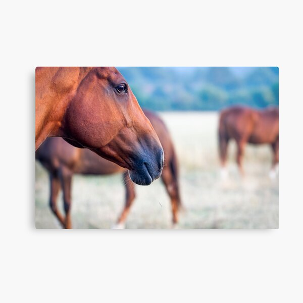 Horse Thoughts Metal Print