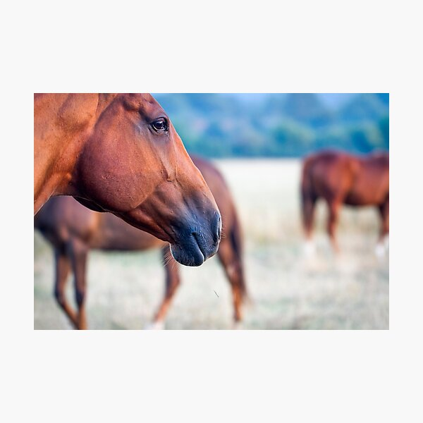 Horse Thoughts Photographic Print