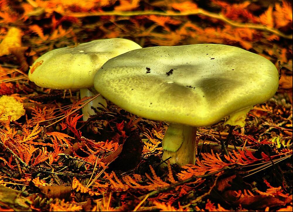 Fall Mushroom by Mien