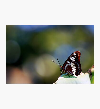 A Sitting Butterfly Photographic Print