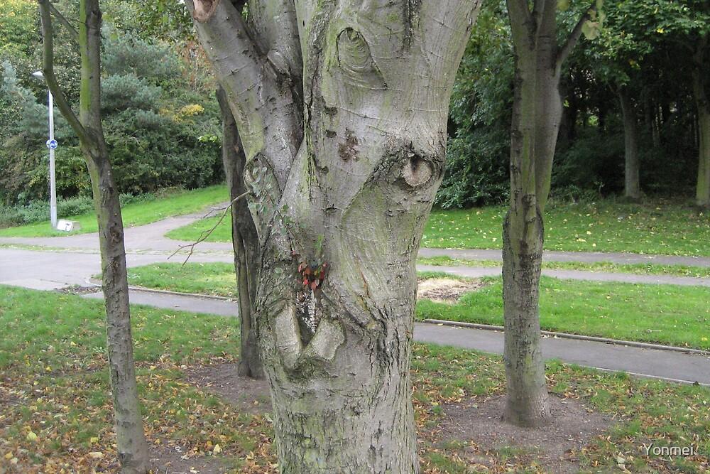Wild Tree Face by Yonmei