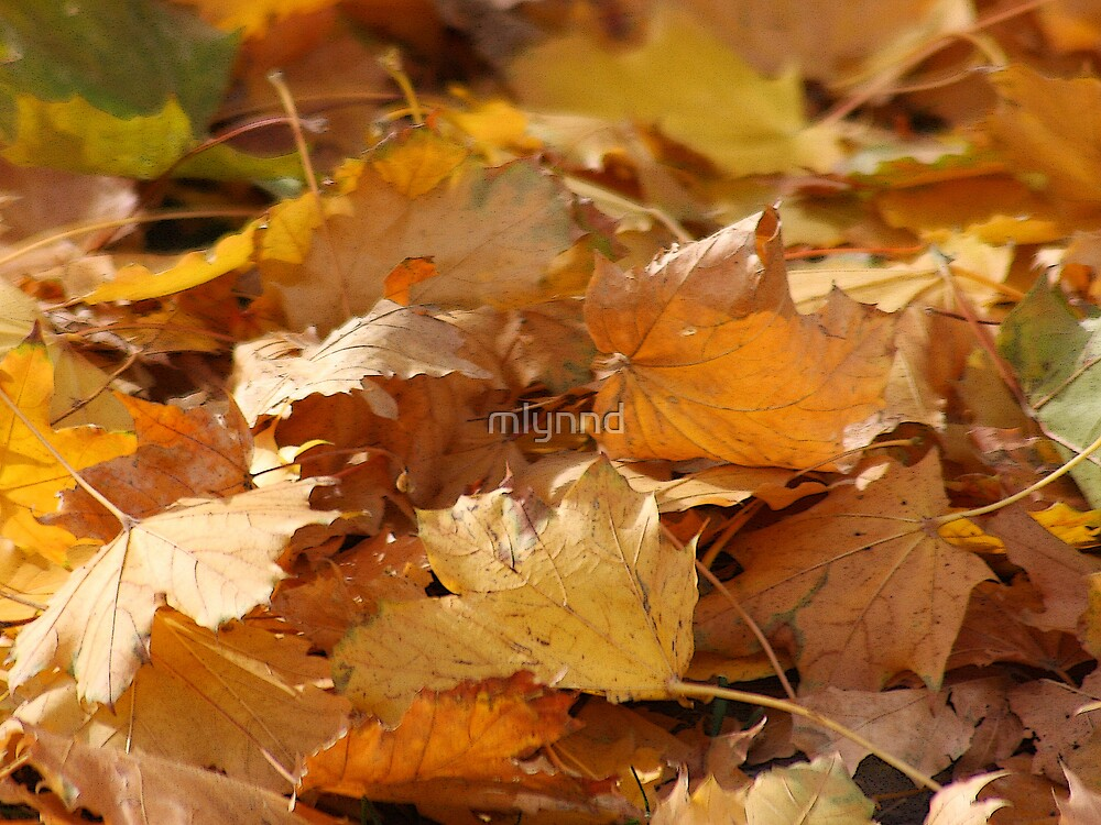 WHEN THE LEAVES GET CRUNCHY by mlynnd