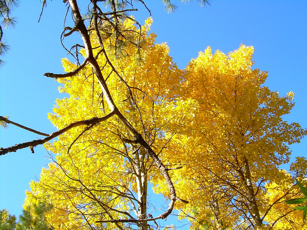 First yellows of Autumn in the High Sierra by Edward Henzi