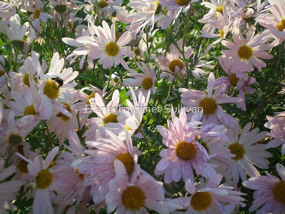 Sunshine on my daisy by Diane Trummer Sullivan