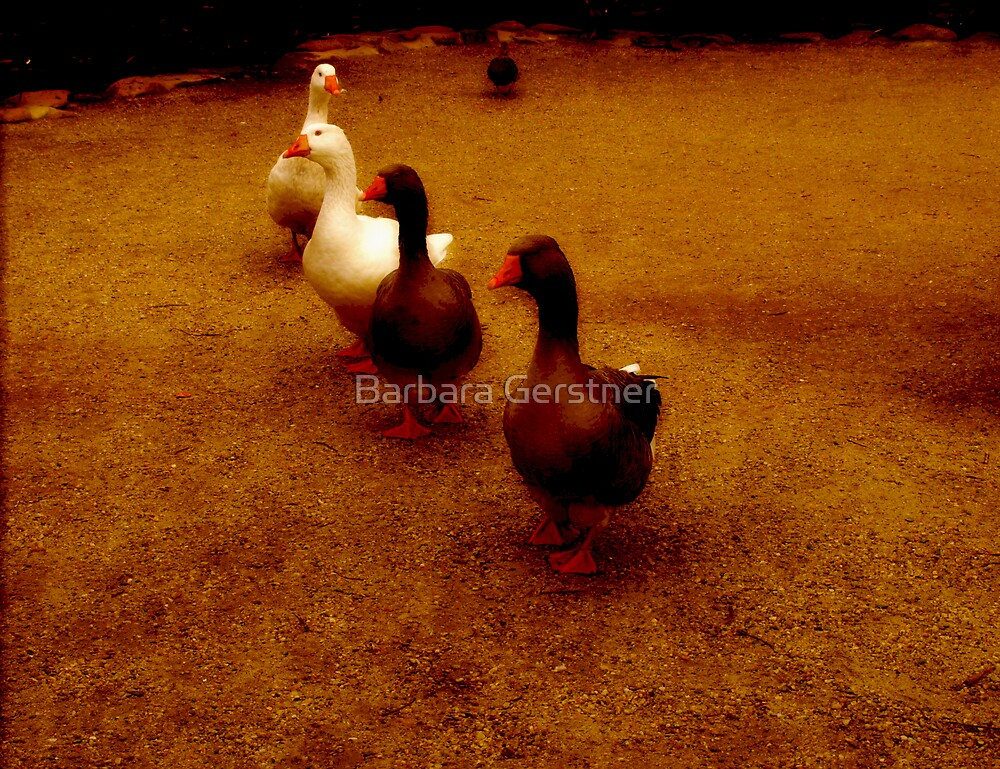 Double date by Barbara Gerstner