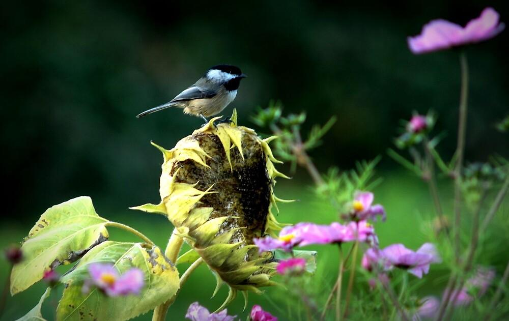 Bird by clare scott