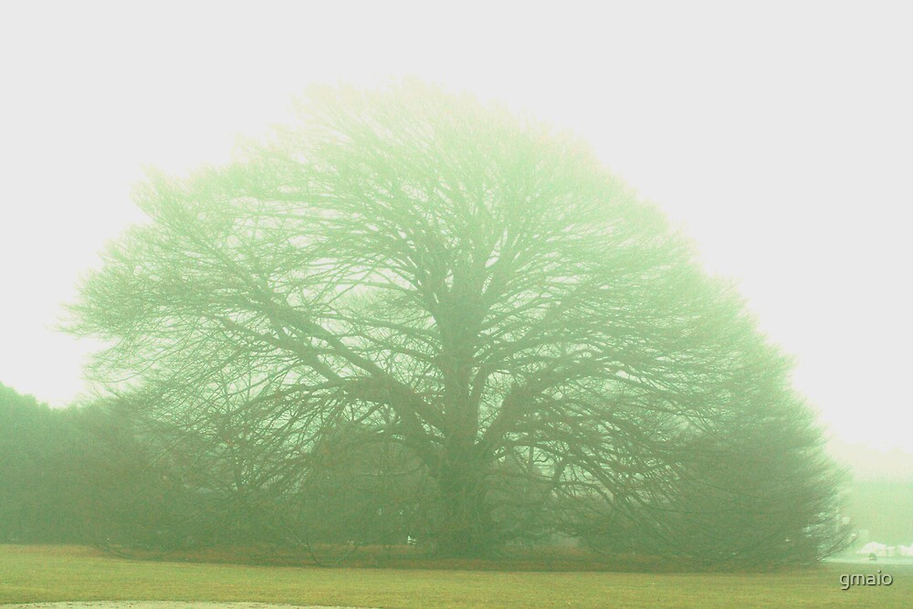 Oak Tree by gmaio