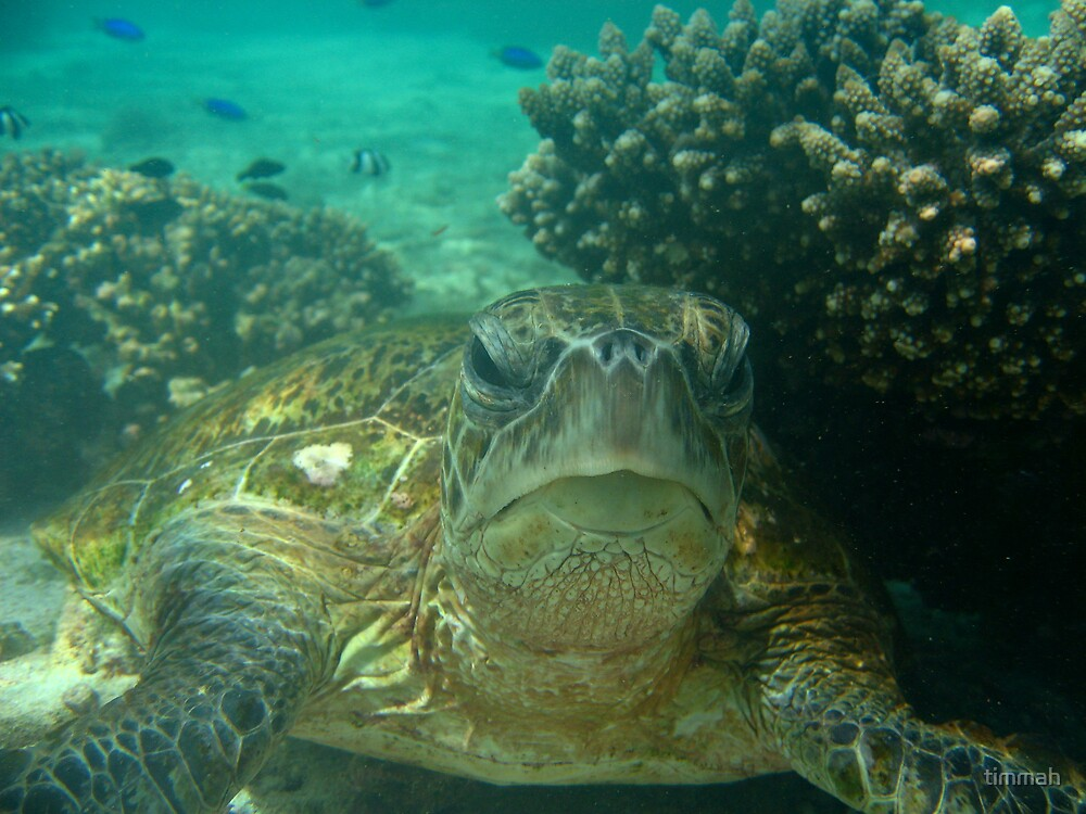 Close up Sea Turtle by timmah
