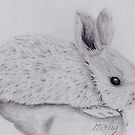Bunny, Bunny Rabbits, Graphite Sketch, Wall Art by chrissyturley