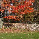 Rock Wall by Tammy F