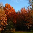 Fall Colors by Tammy F