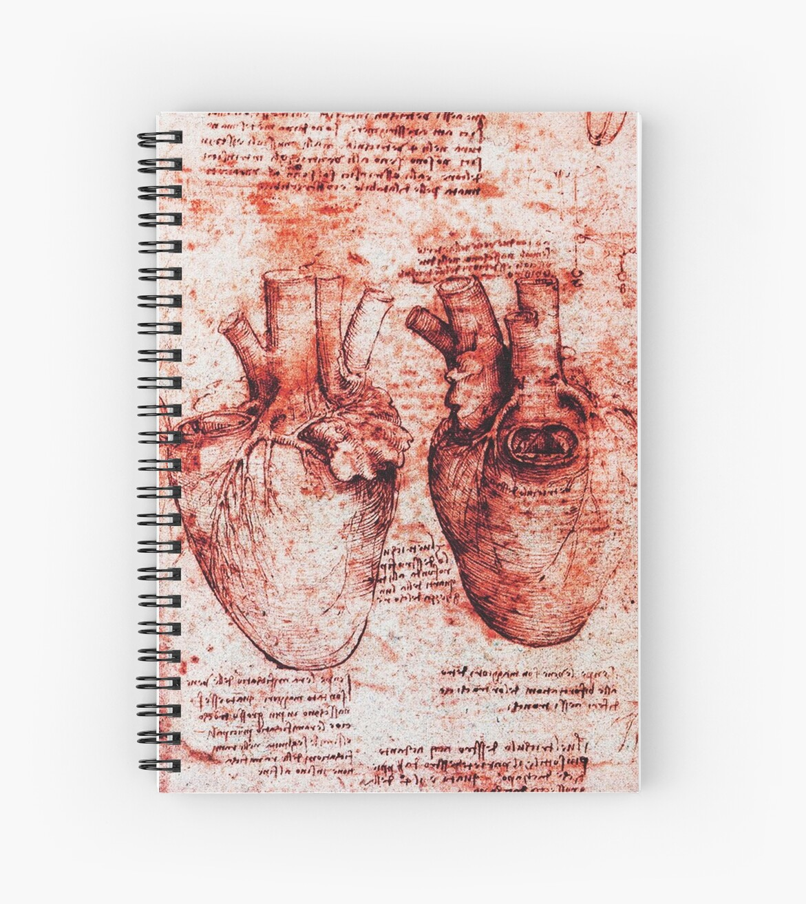 Heart And Its Blood Vessels Leonardo Da Vinci Anatomy Drawings Red