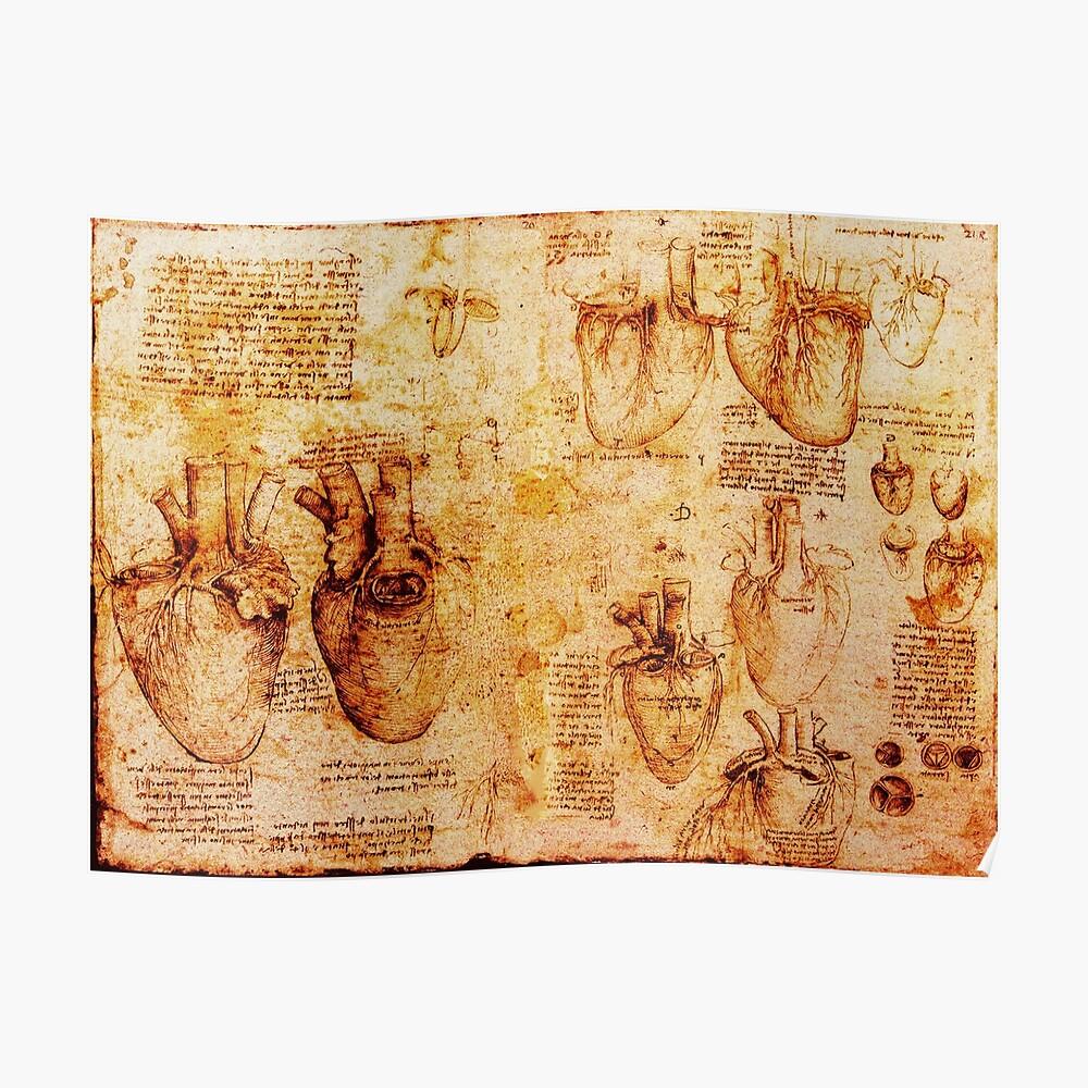 Herz und seine Blutgefäße, Leonardo Da Vinci Anatomy Drawings, Brown Poster
