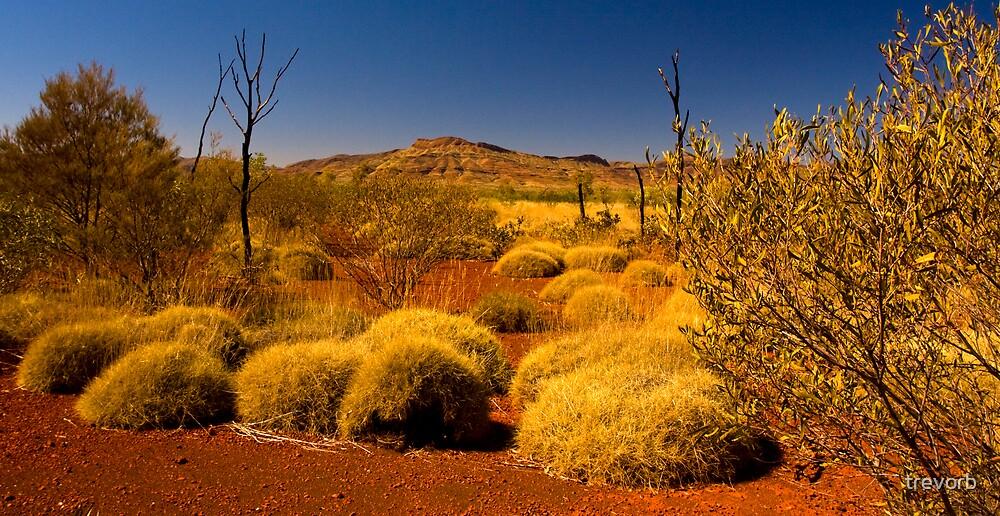 Outback Vista. by trevorb