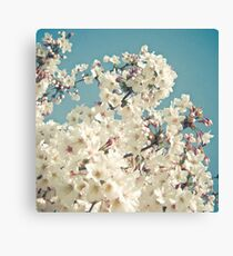 Buds in May Canvas Print