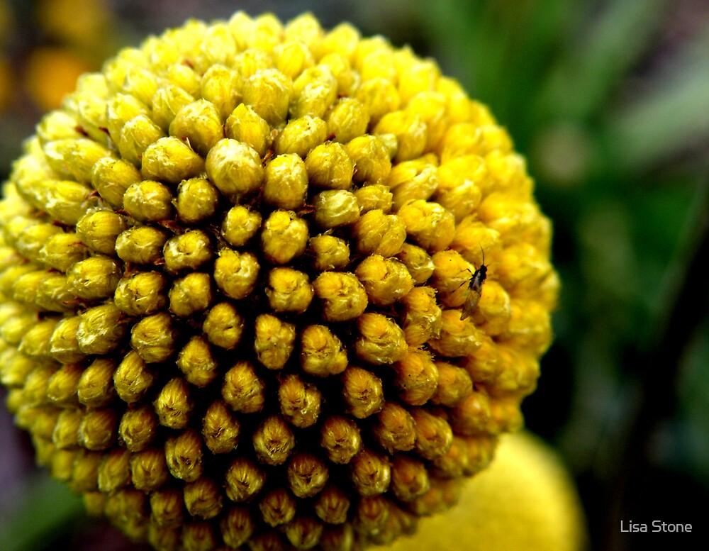 Glenrowan flower  by Lisa Stone