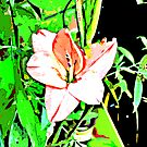 Pink Flower Pop Art by davesphotographics
