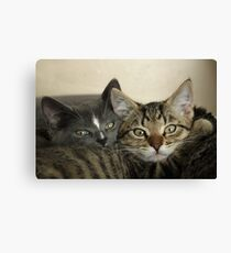 Two close kitten pussies Canvas Print