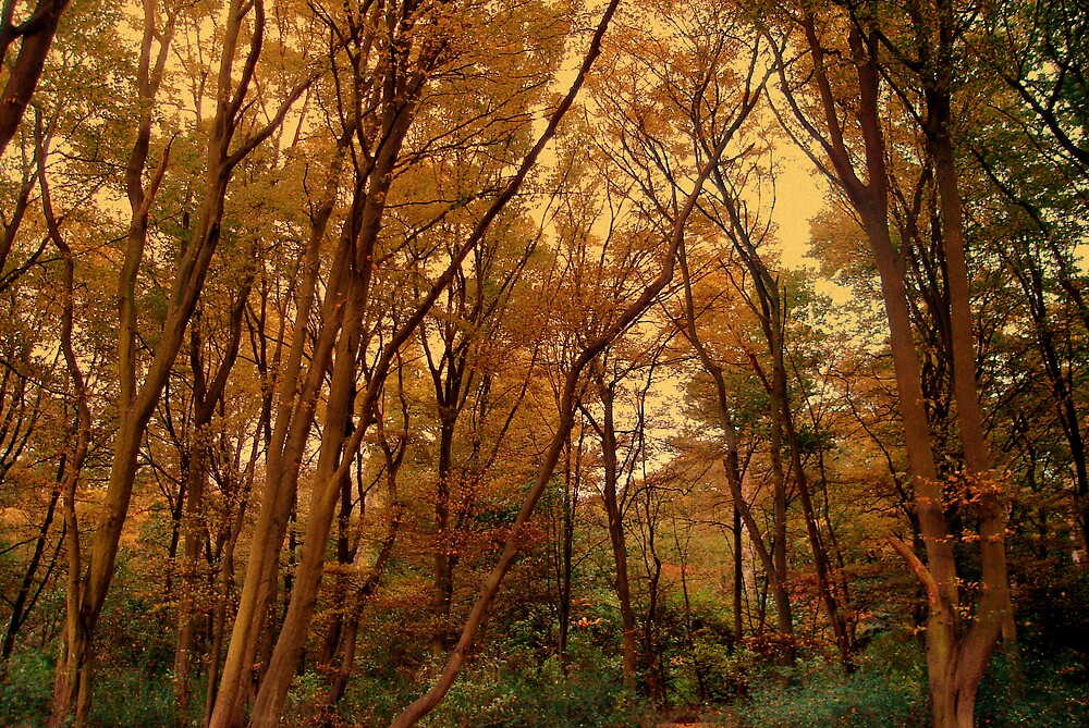 Autumn Woods... by Kate Towers IPA