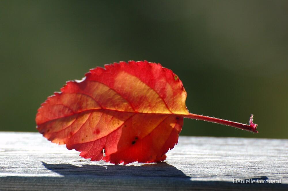 Apple Leaf by Danielle Girouard