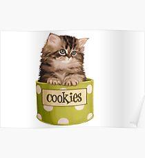 Funny Kitten Poster