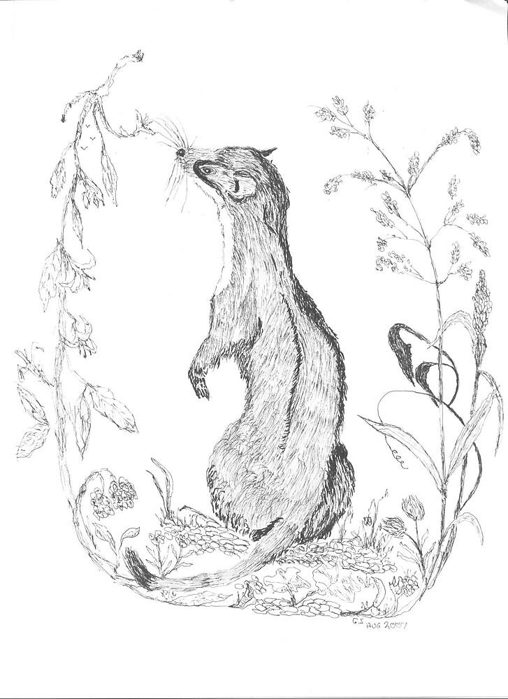 Weasel by GEORGE SANDERSON