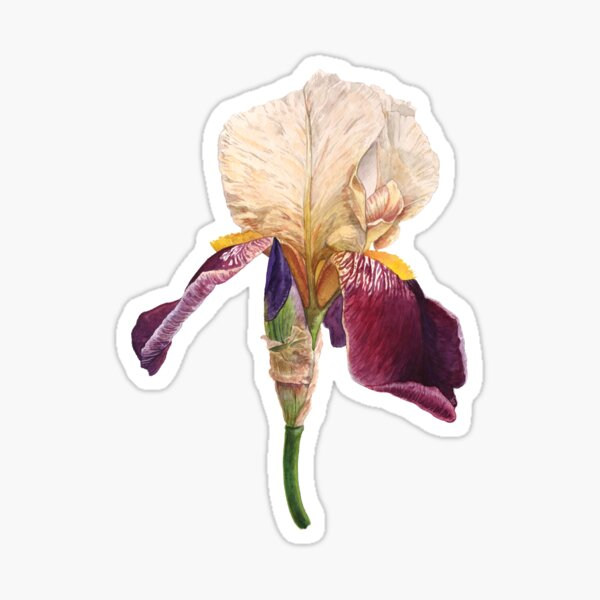 Iris Sticker