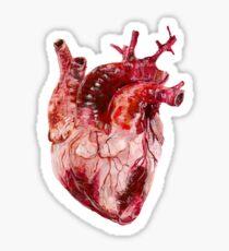 Coeur Anatomique  Sticker