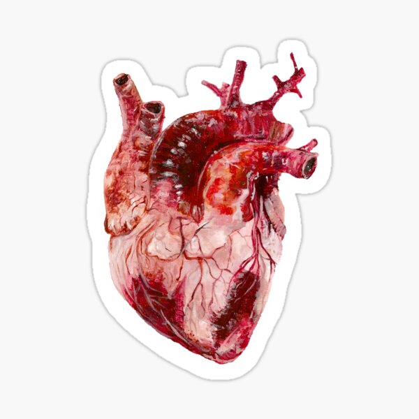 Coeur Anatomique  Sticker
