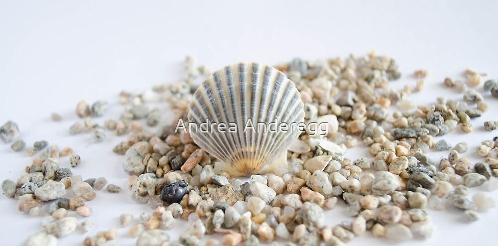 Seashell by andreaanderegg