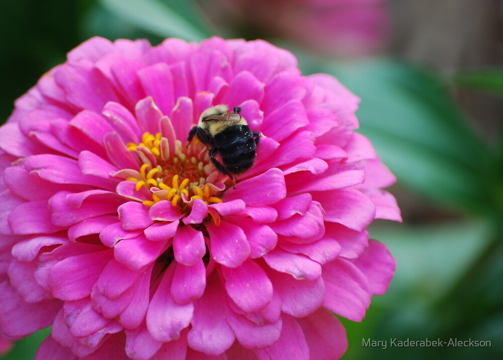 Bee on Pink Flower by Mary Kaderabek-Aleckson