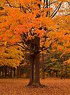 Ostentatious Autumn by Dawne Olson