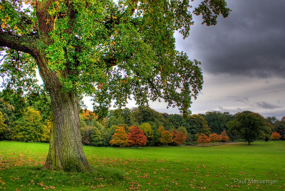 Camperdown Park Dundee 2 by Paul Messenger
