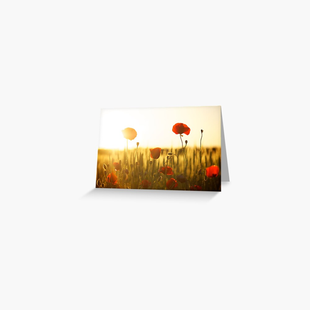 Sunset Poppy Greeting Card