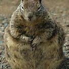 Big Fat Mama by Anne-Marie Bokslag