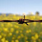 rusty wire by shakey